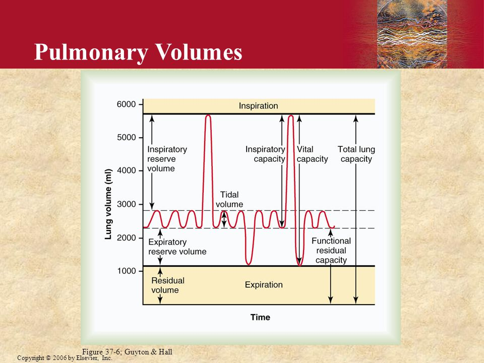 Copyright © 2006 by Elsevier, Inc. Pulmonary Volumes Figure 37-6; Guyton & Hall