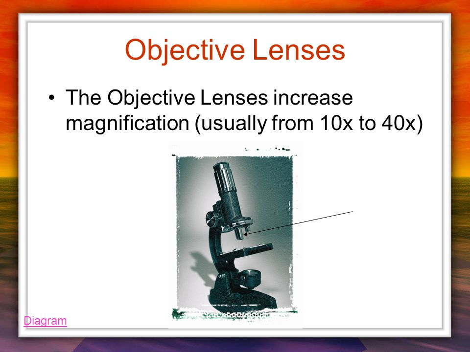 Objective Lenses The Objective Lenses increase magnification (usually from 10x to 40x) Diagram