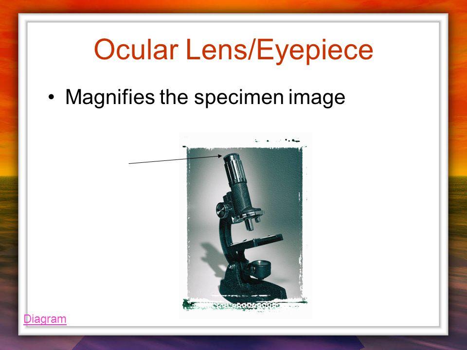 Ocular Lens/Eyepiece Magnifies the specimen image Diagram