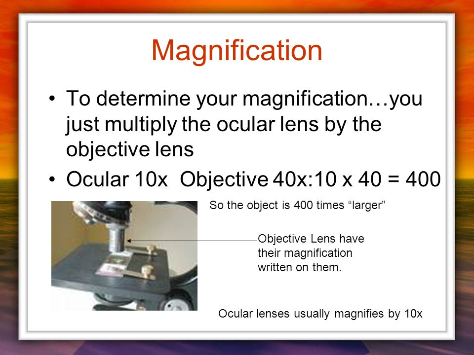 To determine your magnification…you just multiply the ocular lens by the objective lens Ocular 10x Objective 40x:10 x 40 = 400 Objective Lens have their magnification written on them.