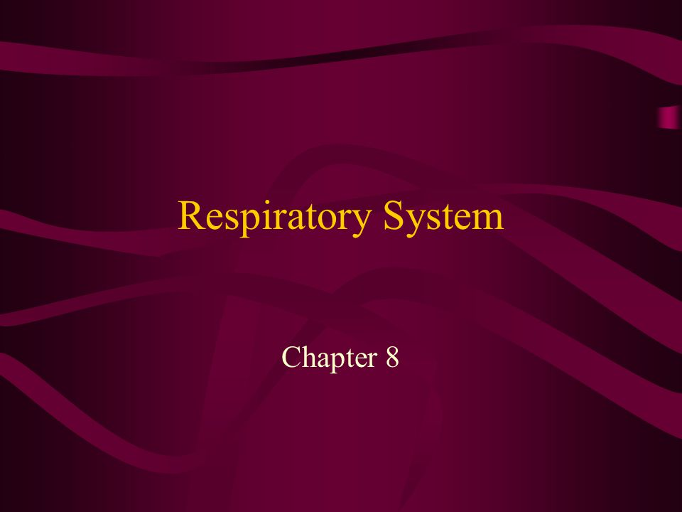 Respiratory System Chapter 8