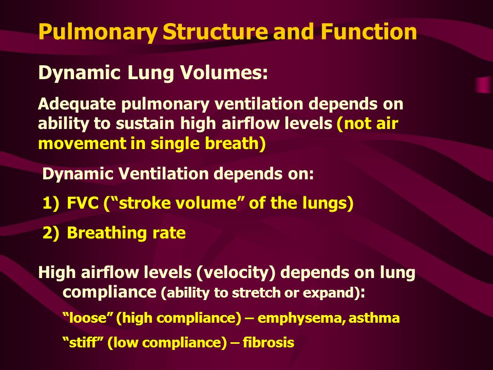 Pulmonary Structure and Function Dynamic Lung Volumes: Adequate pulmonary ventilation depends on ability to sustain high airflow levels (not air movem