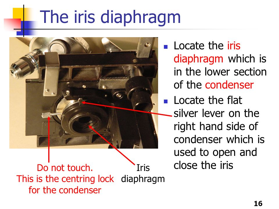 16 The iris diaphragm Locate the iris diaphragm which is in the lower section of the condenser Locate the flat silver lever on the right hand side of condenser which is used to open and close the iris Do not touch.