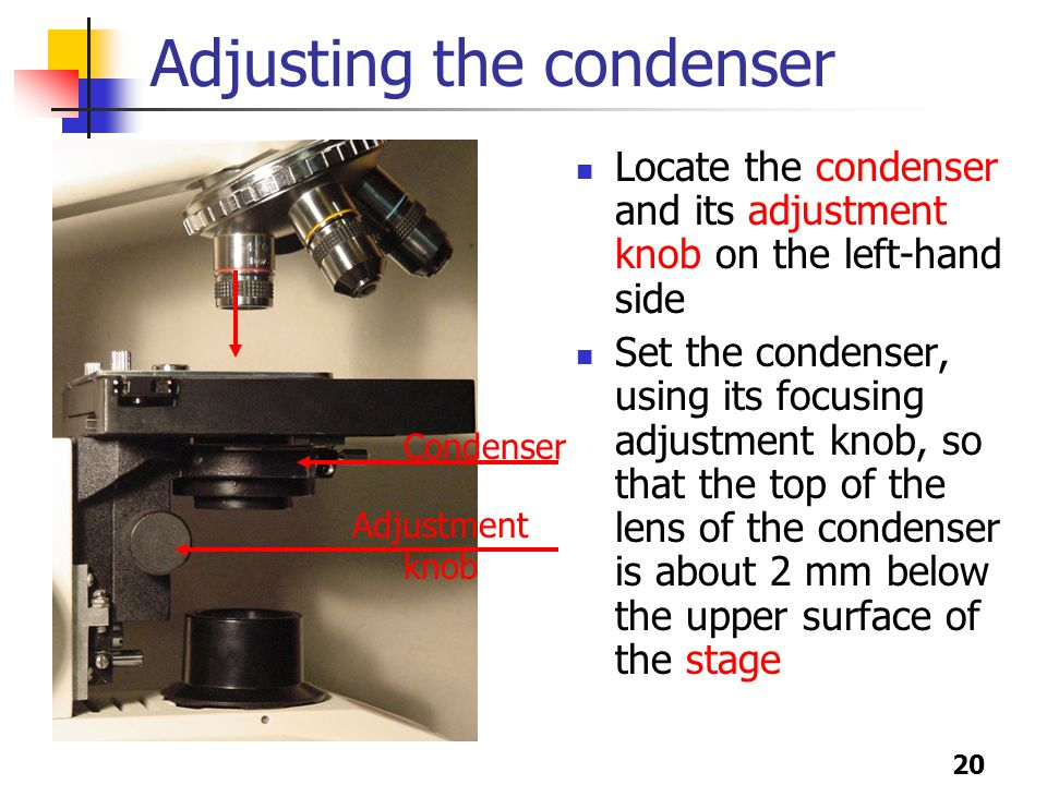 20 Adjusting the condenser Locate the condenser and its adjustment knob on the left-hand side Set the condenser, using its focusing adjustment knob, so that the top of the lens of the condenser is about 2 mm below the upper surface of the stage Condenser Adjustment knob