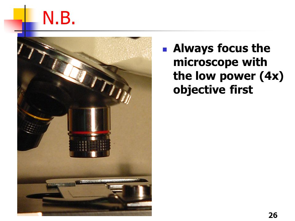 26 N.B. Always focus the microscope with the low power (4x) objective first