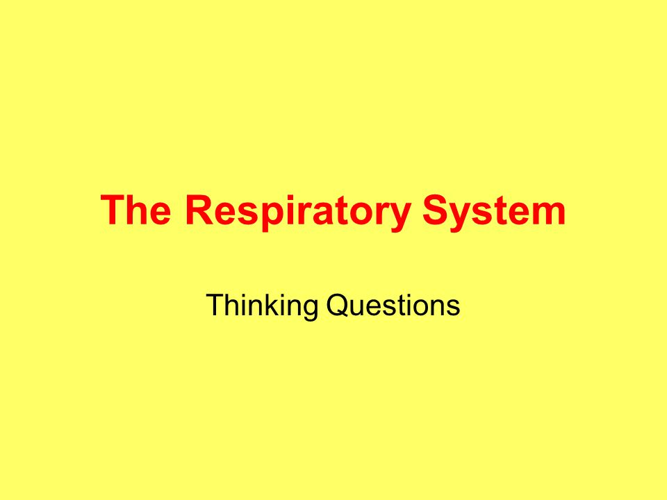 The Respiratory System Thinking Questions
