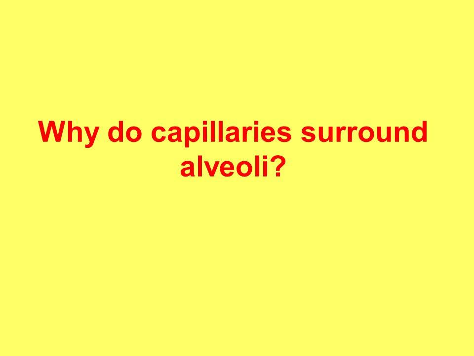 Why do capillaries surround alveoli?