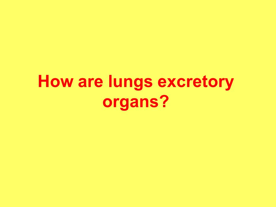 How are lungs excretory organs?