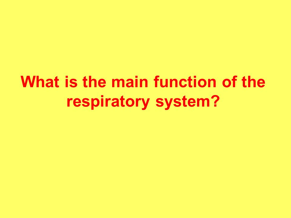 What is the main function of the respiratory system?