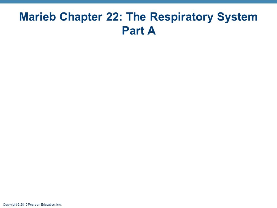 Copyright © 2010 Pearson Education, Inc. Marieb Chapter 22: The Respiratory System Part A