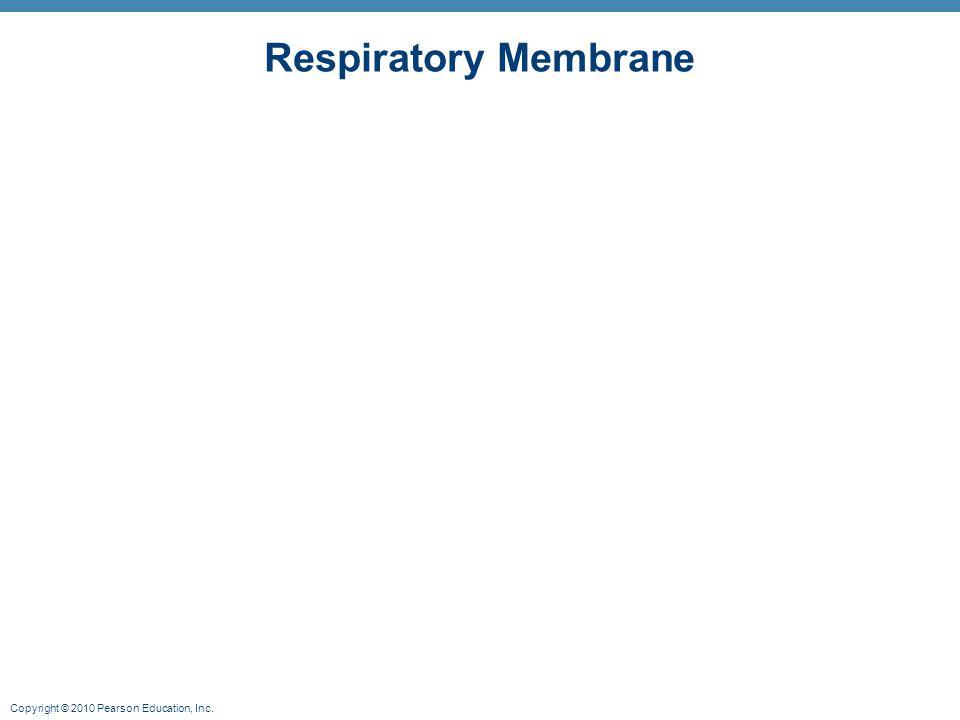 Copyright © 2010 Pearson Education, Inc. Respiratory Membrane