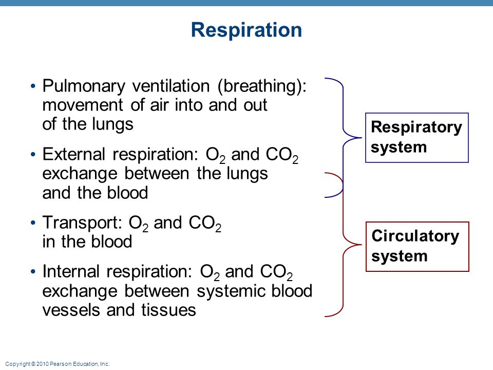 Copyright © 2010 Pearson Education, Inc. Respiration Pulmonary ventilation (breathing): movement of air into and out of the lungs External respiration