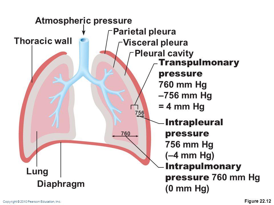 Copyright © 2010 Pearson Education, Inc. Figure 22.12 Atmospheric pressure Intrapleural pressure 756 mm Hg (–4 mm Hg) Transpulmonary pressure 760 mm H