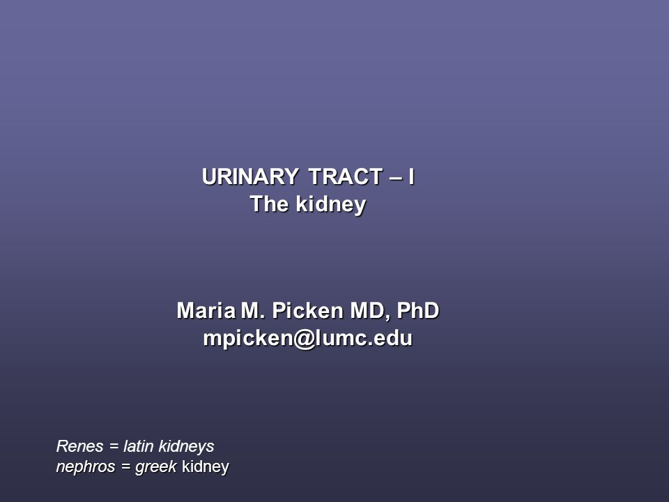 URINARY TRACT – I The kidney Maria M. Picken MD, PhD mpicken@lumc.edu Renes = latin kidneys nephros = greek kidney