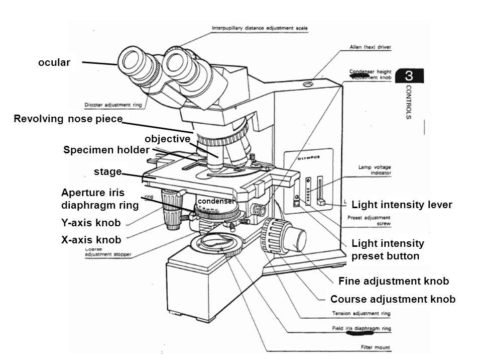 Course adjustment knob Fine adjustment knob Y-axis knob X-axis knob Specimen holder ocular objective Light intensity lever Light intensity preset butt
