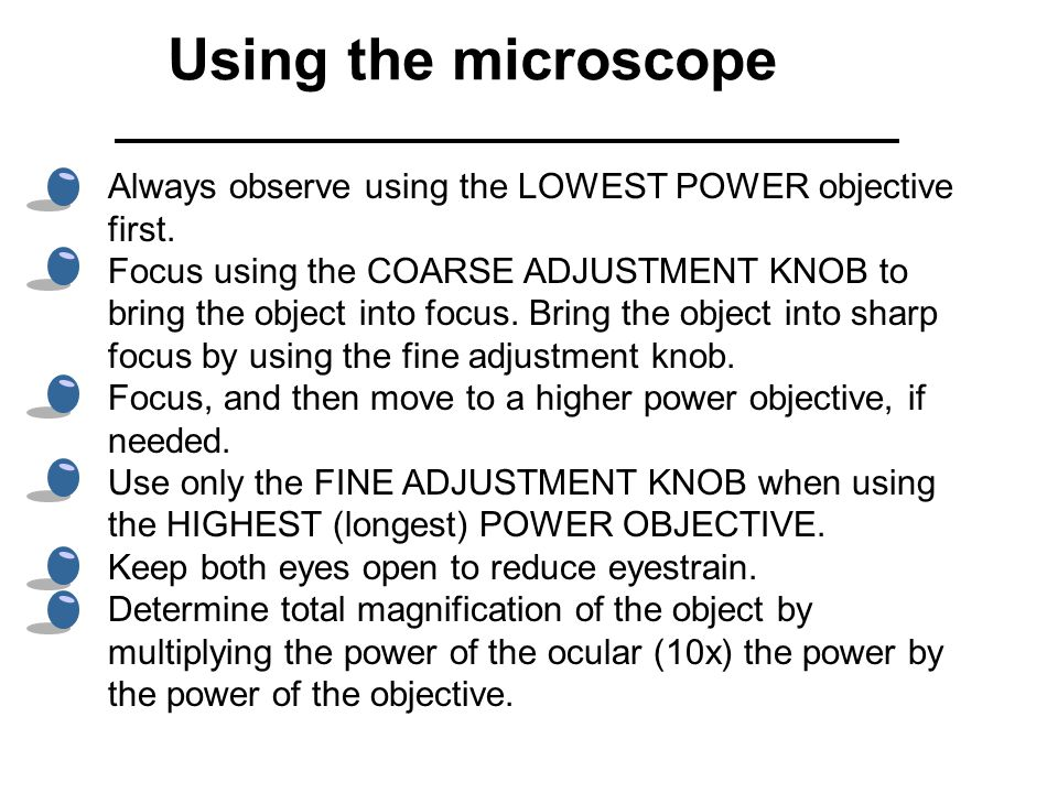 Using the microscope Always observe using the LOWEST POWER objective first.