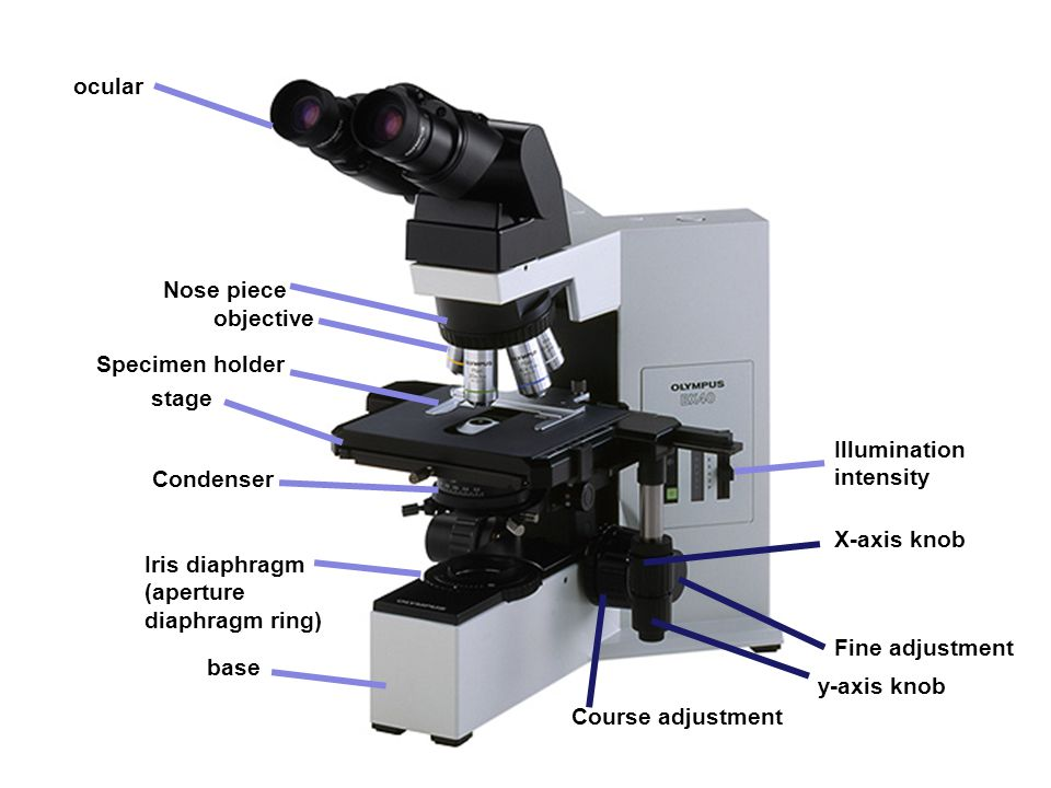base ocular objective Illumination intensity stage Nose piece Specimen holder Course adjustment X-axis knob Condenser Iris diaphragm (aperture diaphra