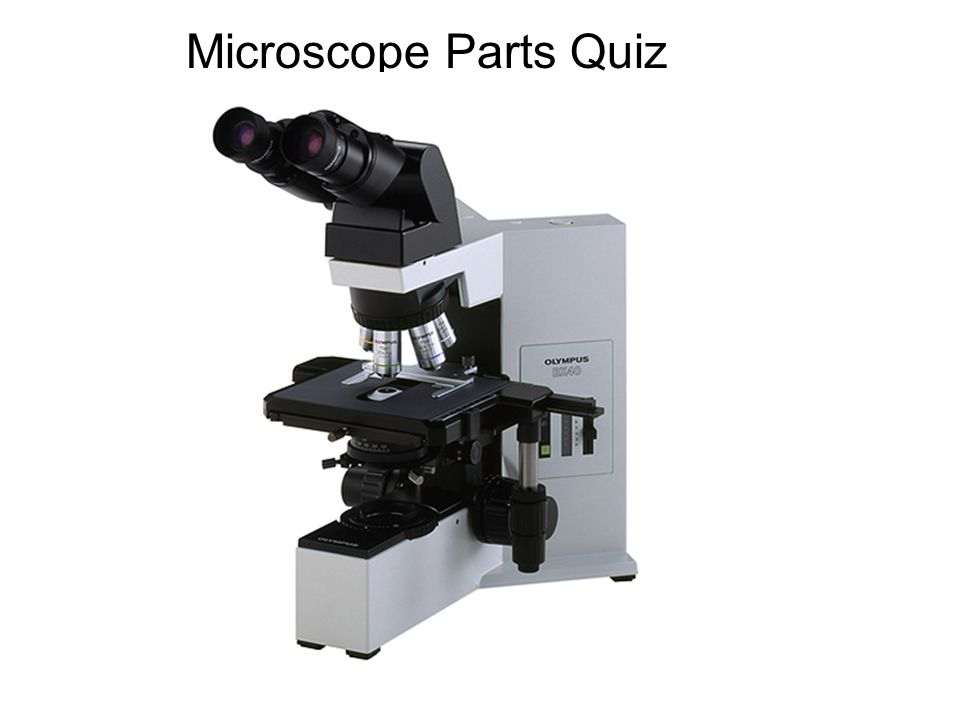 Microscope Parts Quiz