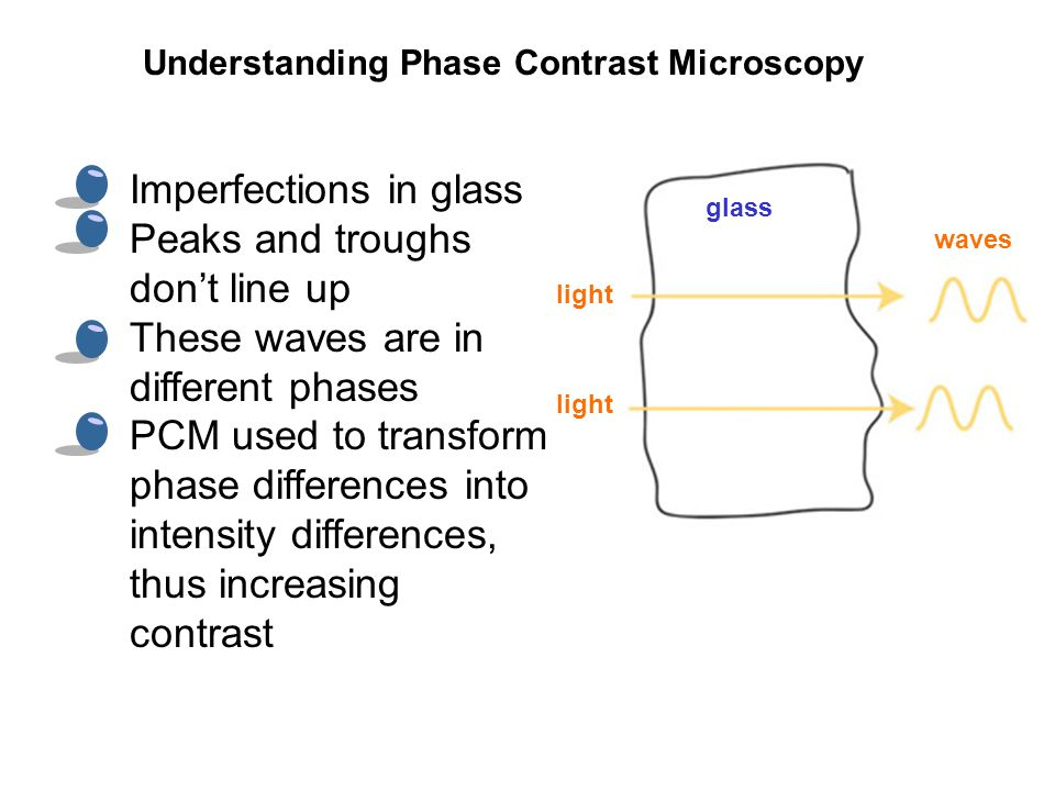 Imperfections in glass Peaks and troughs don't line up These waves are in different phases PCM used to transform phase differences into intensity differences, thus increasing contrast Understanding Phase Contrast Microscopy light glass light waves