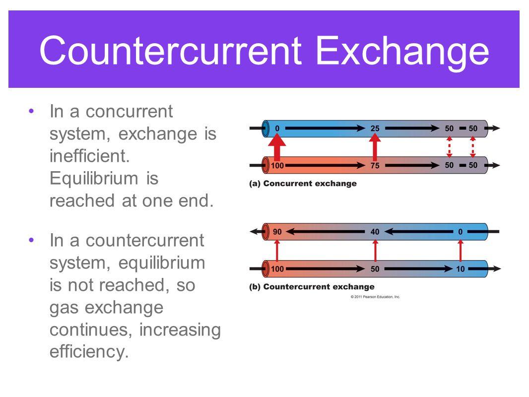 Fish Gills Fish increase gas exchange efficiency using countercurrent exchange.