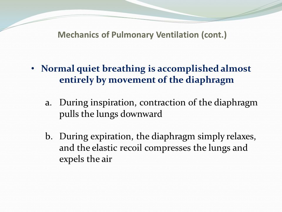 Mechanics of Pulmonary Ventilation (cont.) Normal quiet breathing is accomplished almost entirely by movement of the diaphragm a.During inspiration, c