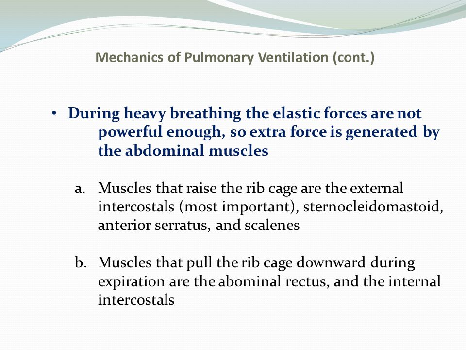 Mechanics of Pulmonary Ventilation (cont.) During heavy breathing the elastic forces are not powerful enough, so extra force is generated by the abdom