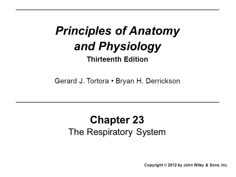 Pharynx Respiratory diverticulum Tracheal bud Esophagus Trachea Bronchial buds Esophagus Fourth week