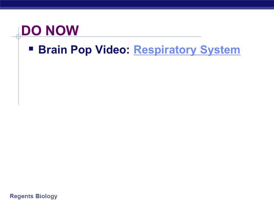 AP Biology 2008-2009 Respiratory System