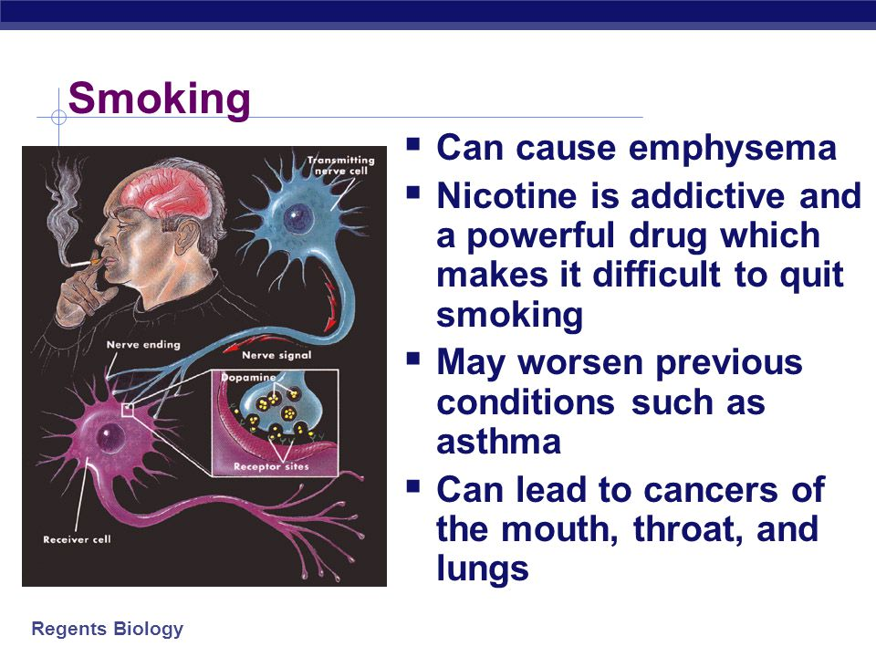 Regents Biology Effects of Smoking  Constricts or narrows the blood vessels  Causes blood pressure to rise and make the heart work harder  Circulat