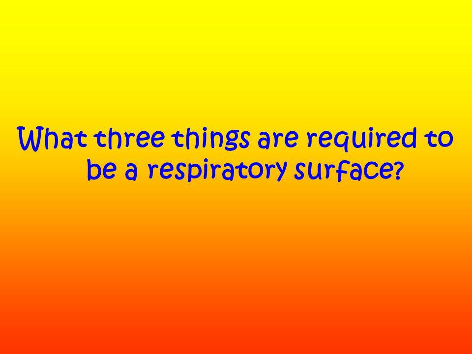 Human Respiration video