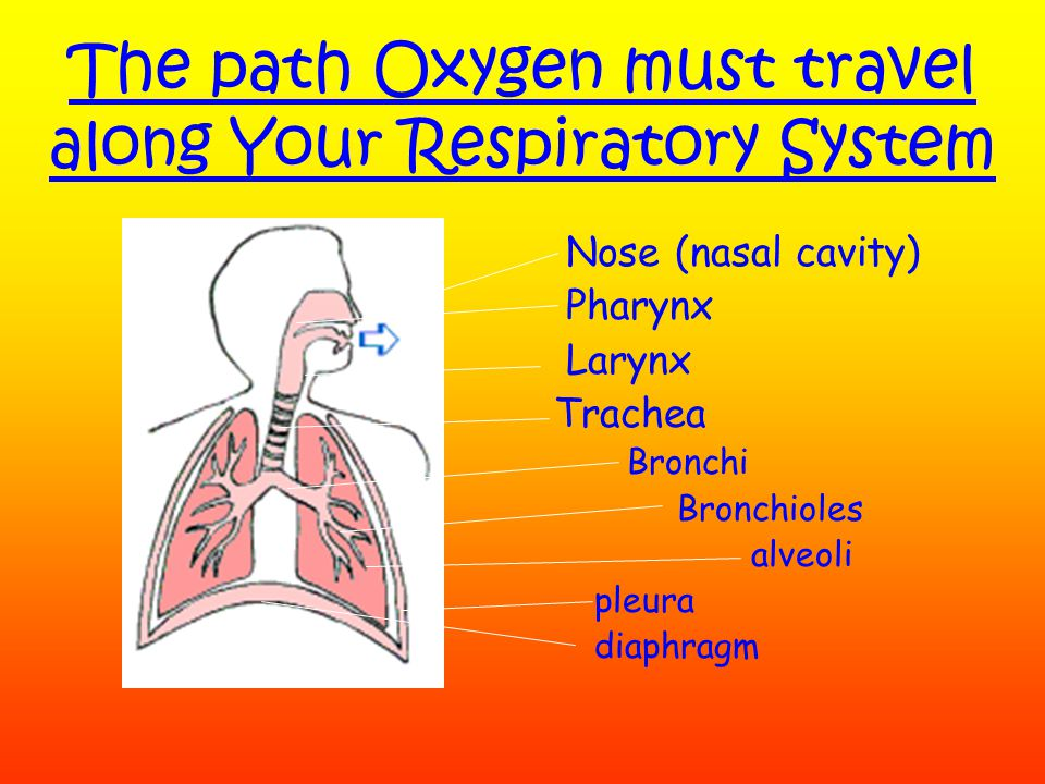 Respiration Respiration- is an organisms' ability to create energy.