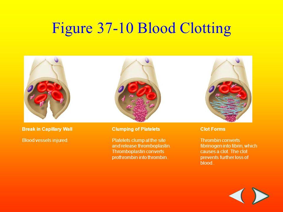 Break in Capillary Wall Blood vessels injured.