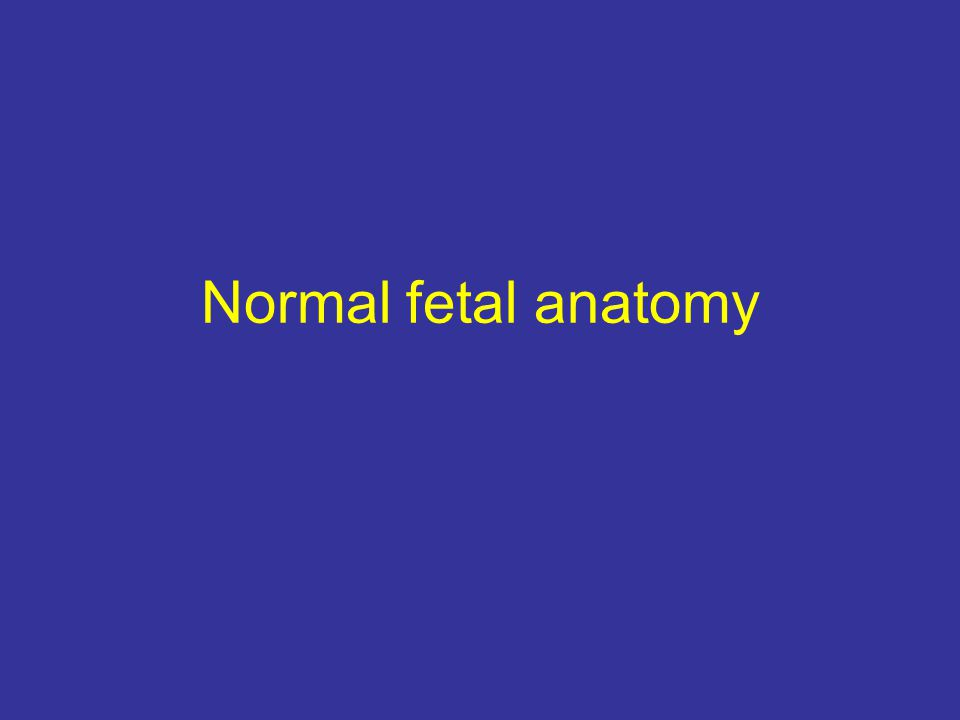 Normal fetal anatomy