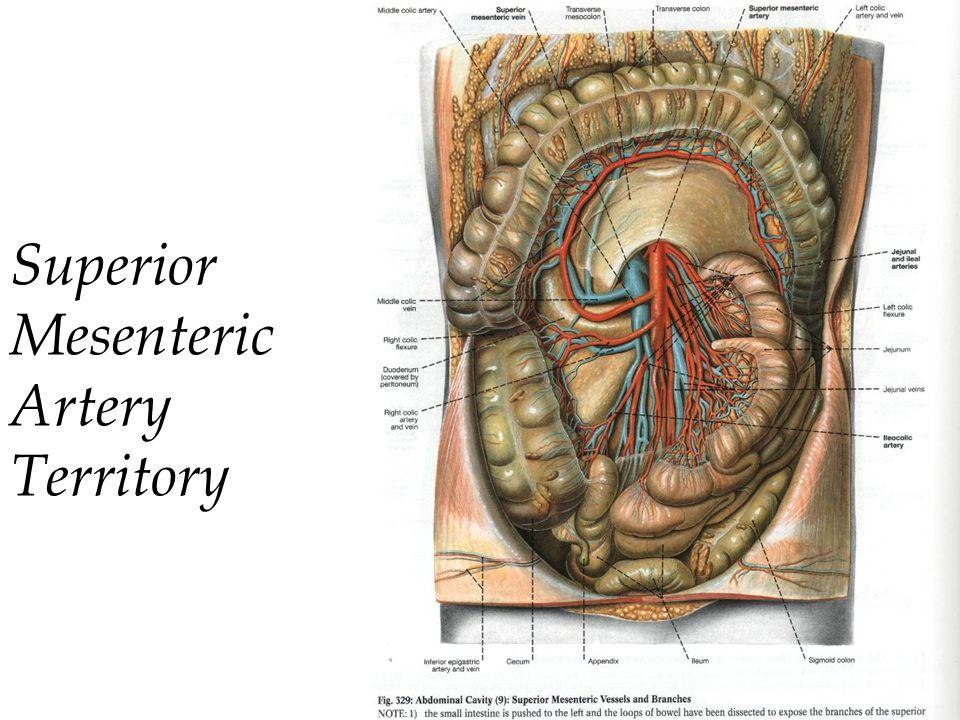 Superior Mesenteric Artery Territory