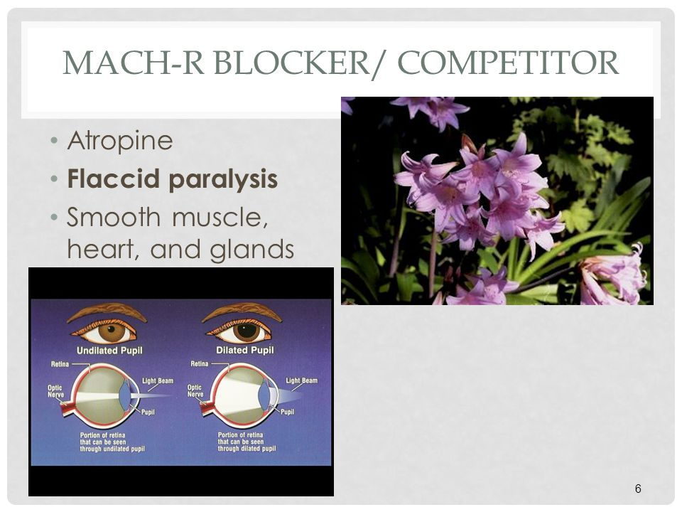 MACH-R BLOCKER/ COMPETITOR Atropine Flaccid paralysis Smooth muscle, heart, and glands 6