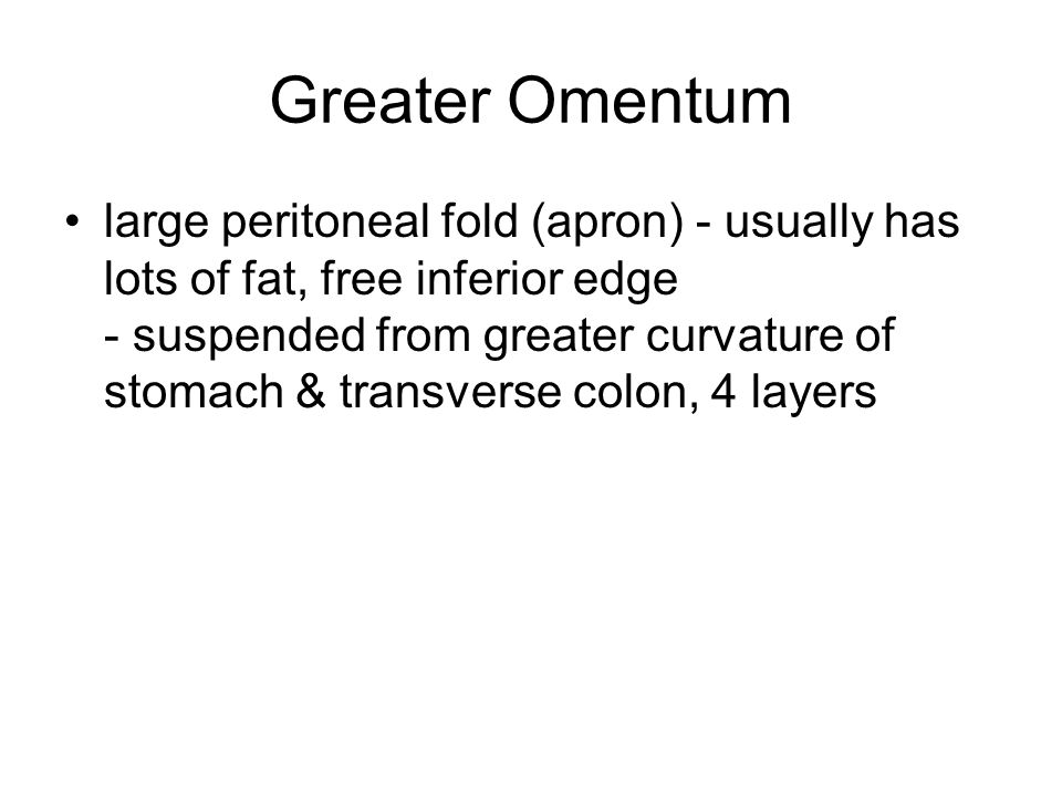 Greater Omentum large peritoneal fold (apron) - usually has lots of fat, free inferior edge - suspended from greater curvature of stomach & transverse