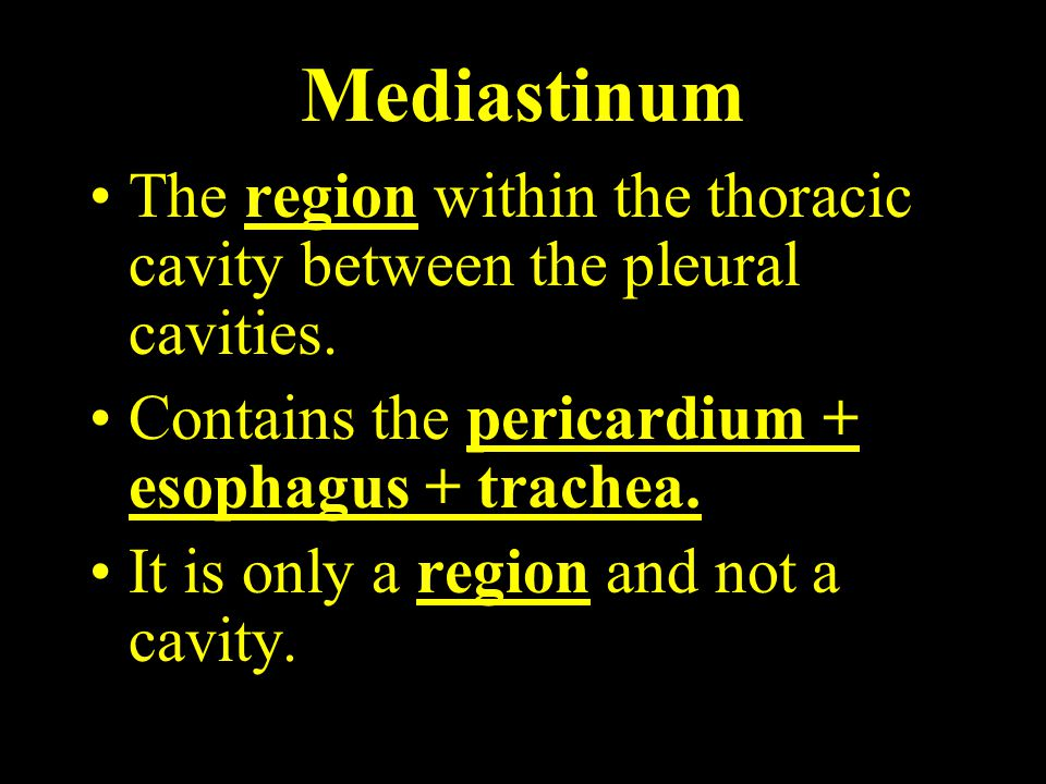 Mediastinum The region within the thoracic cavity between the pleural cavities. Contains the pericardium + esophagus + trachea. It is only a region an