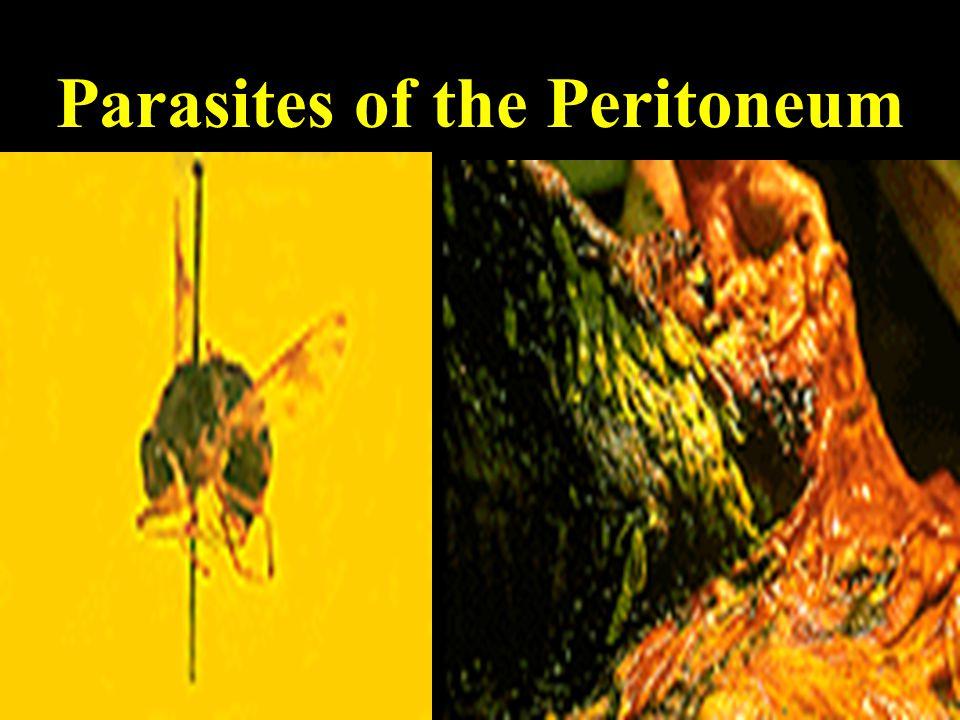Parasites of the Peritoneum
