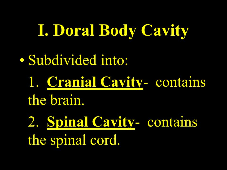 I. Doral Body Cavity Subdivided into: 1. Cranial Cavity- contains the brain. 2. Spinal Cavity- contains the spinal cord.