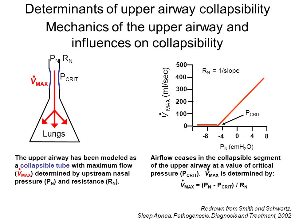 Mechanics of the upper airway and influences on collapsibility The upper airway has been modeled as a collapsible tube with maximum flow (V MAX ) dete