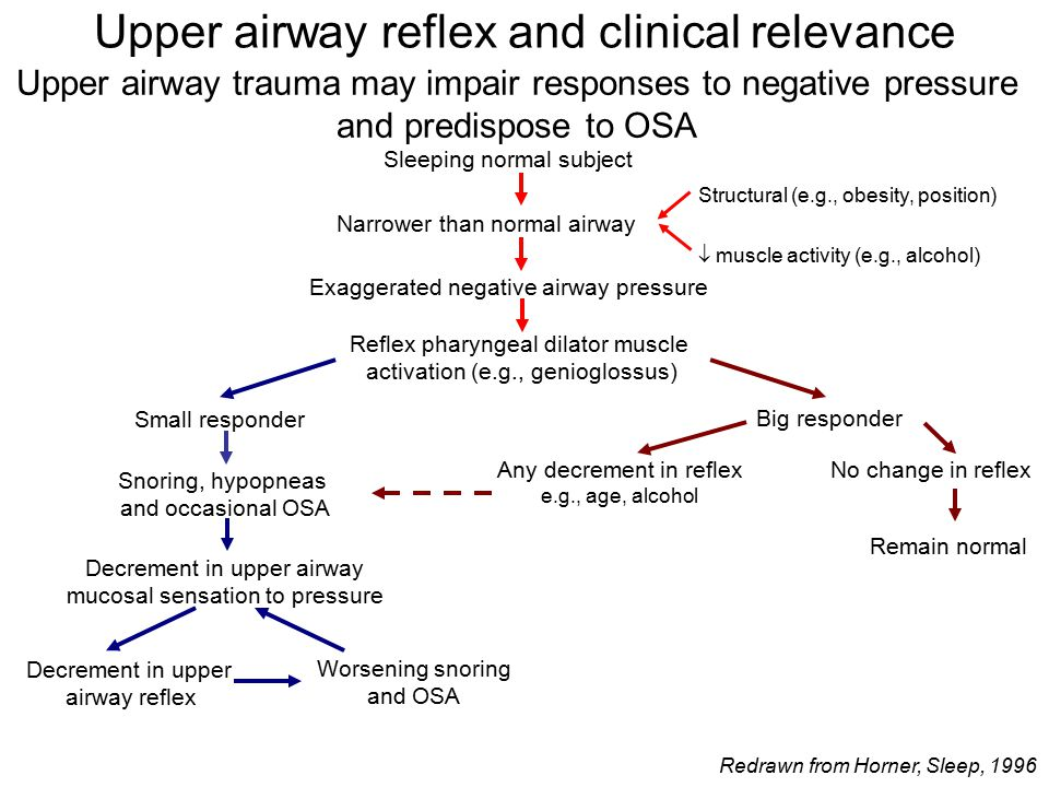 Upper airway trauma may impair responses to negative pressure and predispose to OSA Sleeping normal subject Narrower than normal airway Structural (e.g., obesity, position)  muscle activity (e.g., alcohol) Exaggerated negative airway pressure Reflex pharyngeal dilator muscle activation (e.g., genioglossus) Small responder Big responder Snoring, hypopneas and occasional OSA Decrement in upper airway mucosal sensation to pressure Decrement in upper airway reflex Worsening snoring and OSA Any decrement in reflex e.g., age, alcohol No change in reflex Remain normal Upper airway reflex and clinical relevance Redrawn from Horner, Sleep, 1996