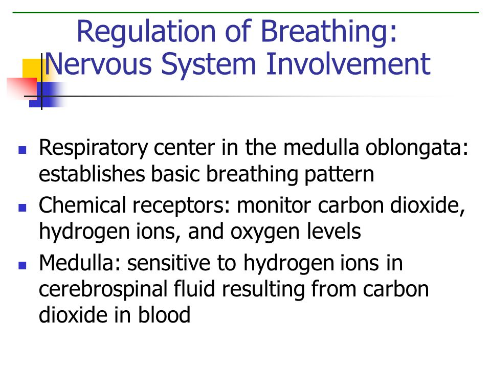 Respiratory center in the medulla oblongata: establishes basic breathing pattern Chemical receptors: monitor carbon dioxide, hydrogen ions, and oxygen levels Medulla: sensitive to hydrogen ions in cerebrospinal fluid resulting from carbon dioxide in blood Regulation of Breathing: Nervous System Involvement