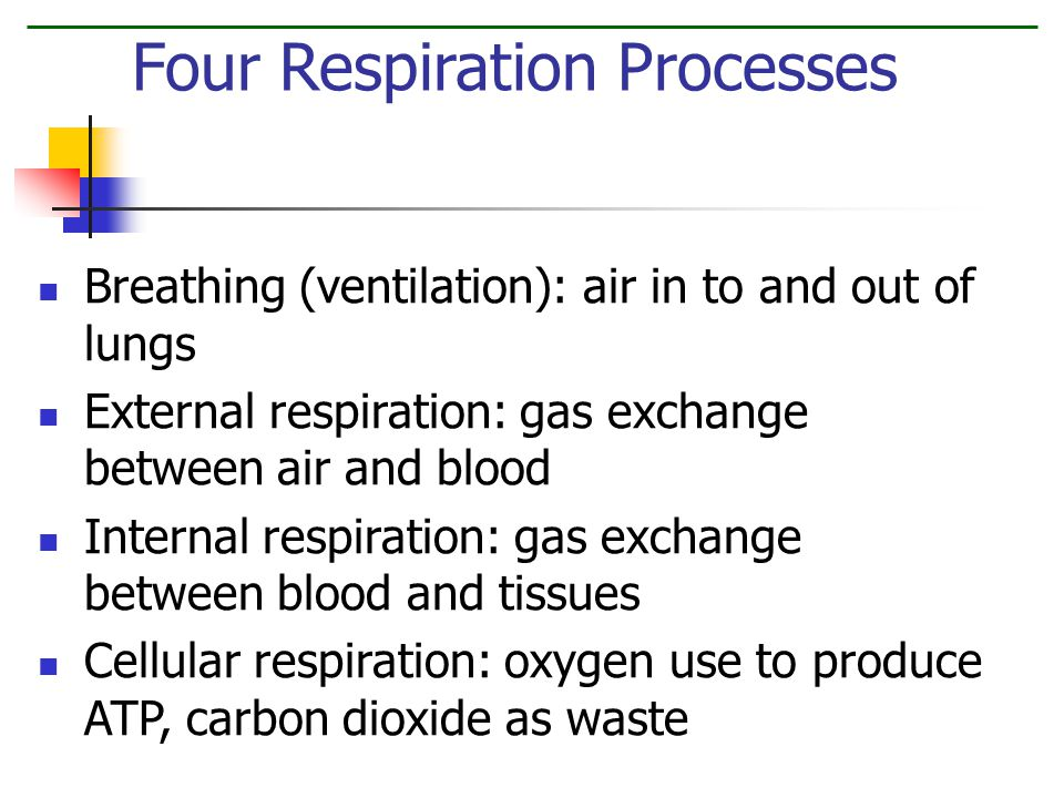 Breathing (ventilation): air in to and out of lungs External respiration: gas exchange between air and blood Internal respiration: gas exchange between blood and tissues Cellular respiration: oxygen use to produce ATP, carbon dioxide as waste Four Respiration Processes