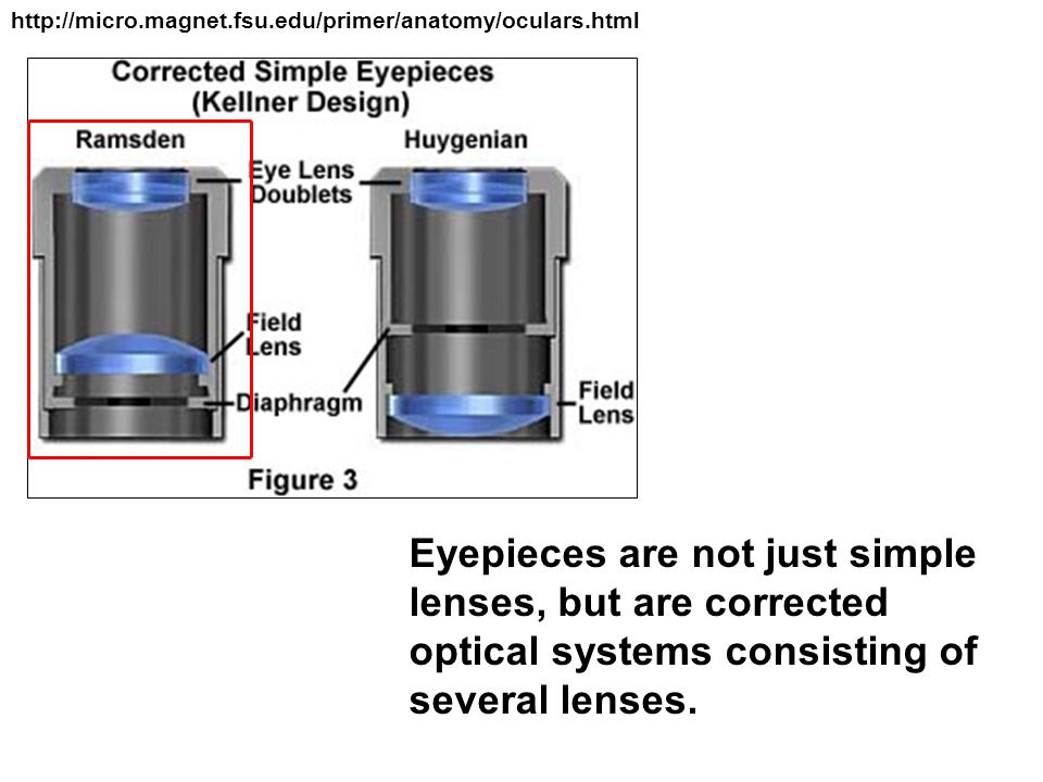 http://micro.magnet.fsu.edu/primer/anatomy/oculars.html Eyepieces are not just simple lenses, but are corrected optical systems consisting of several lenses.