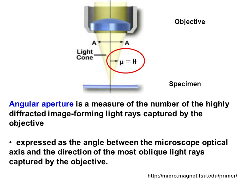Angular aperture is a measure of the number of the highly diffracted image-forming light rays captured by the objective expressed as the angle between the microscope optical axis and the direction of the most oblique light rays captured by the objective.