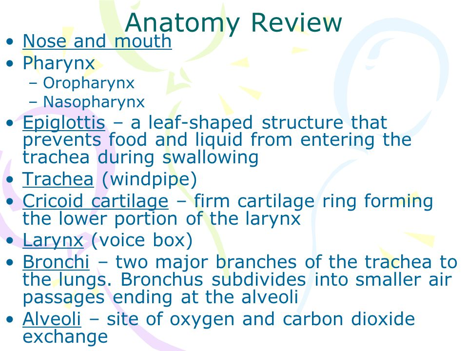 Anatomy Review Nose and mouth Pharynx –Oropharynx –Nasopharynx Epiglottis – a leaf-shaped structure that prevents food and liquid from entering the trachea during swallowing Trachea (windpipe) Cricoid cartilage – firm cartilage ring forming the lower portion of the larynx Larynx (voice box) Bronchi – two major branches of the trachea to the lungs.