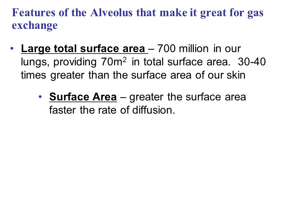 Features of the Alveolus that make it great for gas exchange Large total surface area – 700 million in our lungs, providing 70m 2 in total surface are