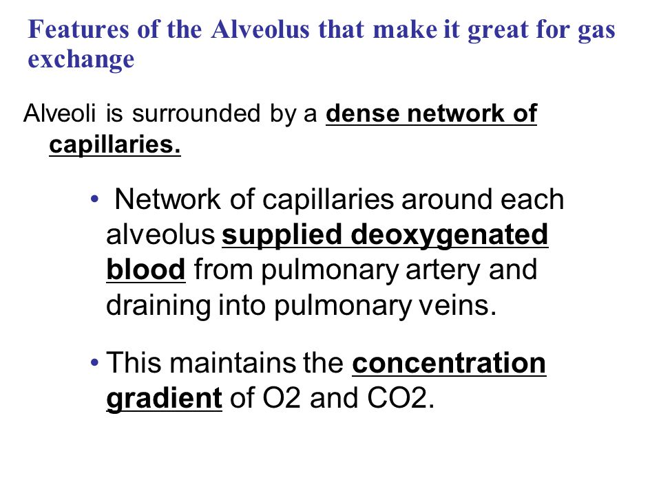 Features of the Alveolus that make it great for gas exchange Alveoli is surrounded by a dense network of capillaries. Network of capillaries around ea