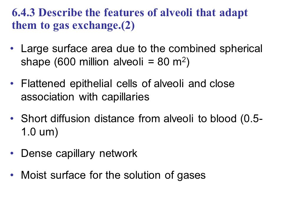 6.4.3 Describe the features of alveoli that adapt them to gas exchange.(2) Large surface area due to the combined spherical shape (600 million alveoli = 80 m 2 ) Flattened epithelial cells of alveoli and close association with capillaries Short diffusion distance from alveoli to blood (0.5- 1.0 um) Dense capillary network Moist surface for the solution of gases
