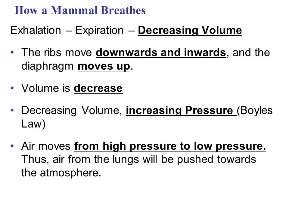 How a Mammal Breathes Exhalation – Expiration – Decreasing Volume The ribs move downwards and inwards, and the diaphragm moves up.